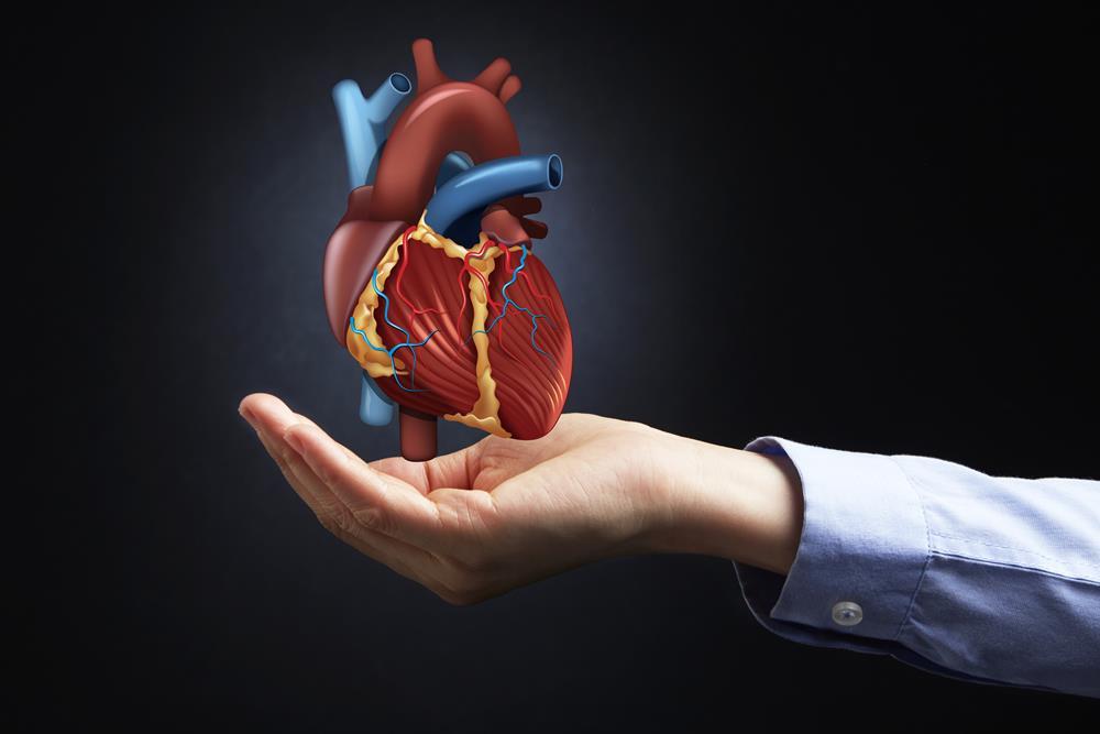 rytmy serca